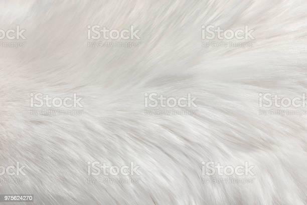 White natural fur background picture id975624270?b=1&k=6&m=975624270&s=612x612&h=s8zkyuevro25zhr7qoiwvdbjo0kqospydsyfz02nid8=