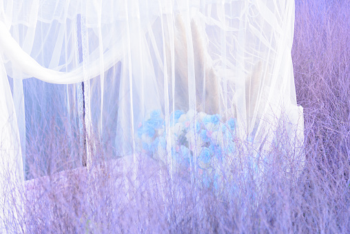 White net with purple Hedgerow  Backdrop in garden for photo