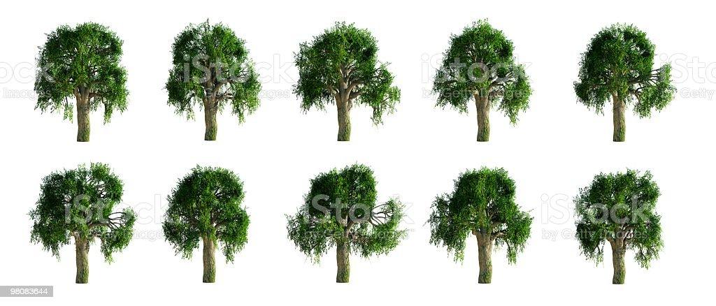 흰떡갈나무 컬레션 royalty-free 스톡 사진