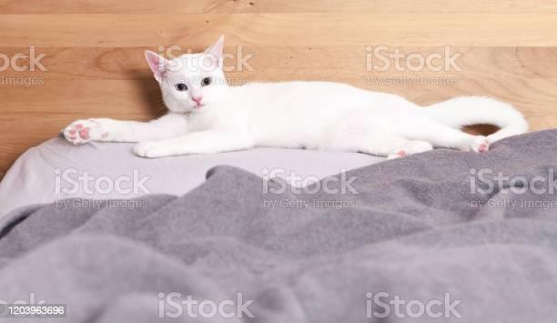 White odd eyed cat picture id1203963696?b=1&k=6&m=1203963696&s=612x612&h=tb2s0ggrxhb3kgfuawhwa5jdnjpnjtlx0o6toq8sr5q=