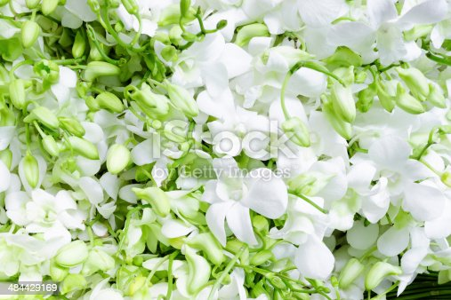 Bundles of white orchid bouquets, flower market.