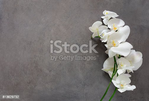 istock White orchid flower in bloom 813629732
