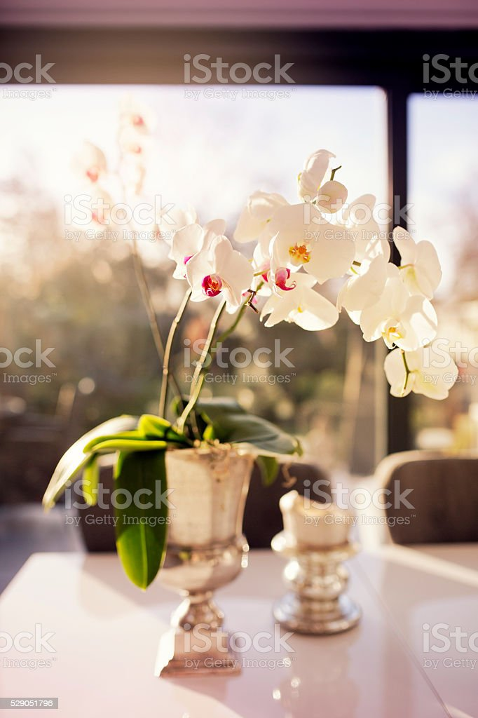 White Orchid Flowers In Silver Vase On The Table Stock Photo More