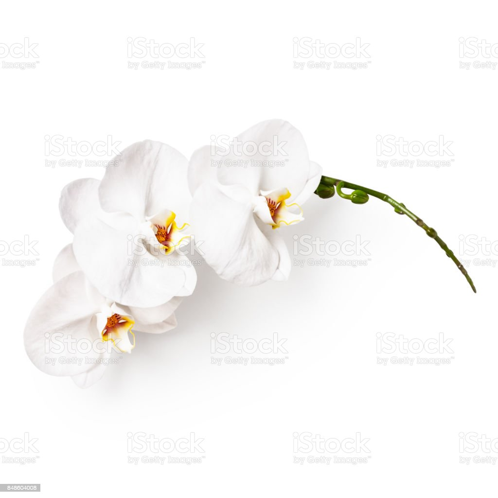 White Orchid Flowers Stock Photo More Pictures Of Arrangement Istock