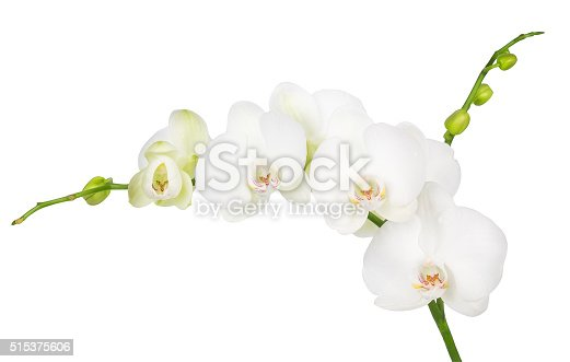 one branch of blooming white orchid isolated on white background
