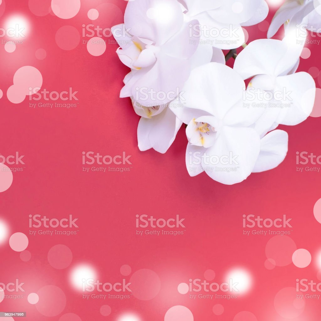White Orchid on red background. - Royalty-free Backgrounds Stock Photo