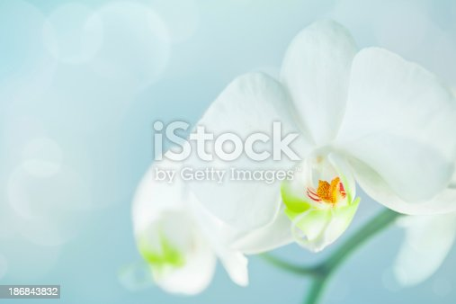 Macro photo of an orchid plant with shallow depth of field.