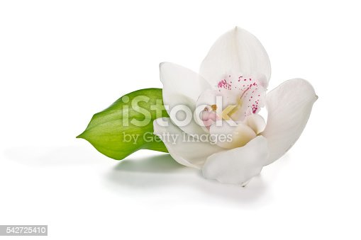 Flower white orchid and green leaf isolated on white background