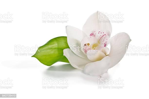 White orchid picture id542725410?b=1&k=6&m=542725410&s=612x612&h=acxbz1ktvqxik5m3ot 2gqcs4s0vzibmkexf2gt h g=