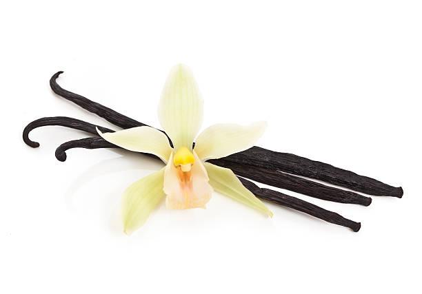 Vanilleschoten und Orchidee – Foto