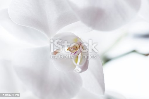 Close up of white orchidea