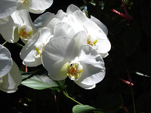 White Orchids in Garden stock photo