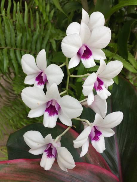 White orchids on the tree picture id1295752627?b=1&k=6&m=1295752627&s=612x612&w=0&h=warl06p9jzsg6k vxau7i4ilyhuzr7pdxu6biardnvg=