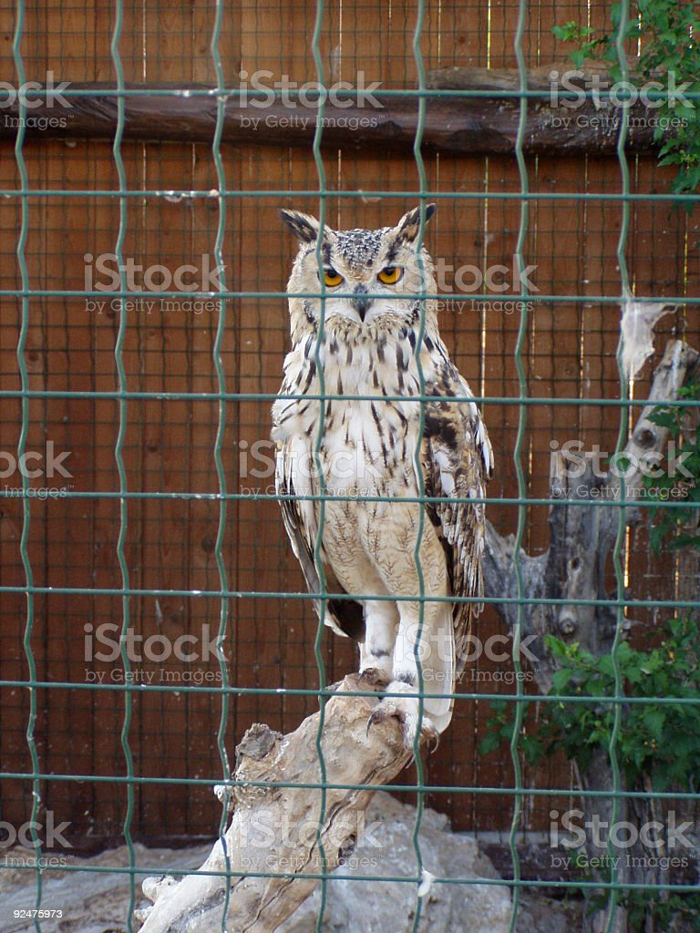 White owl in a cage royalty-free stock photo