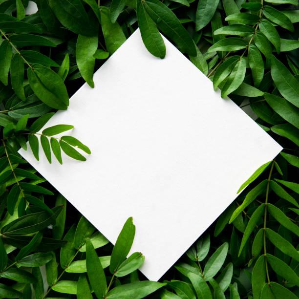Livro branco colocada sobre as folhas verdes com espaço para texto. - foto de acervo
