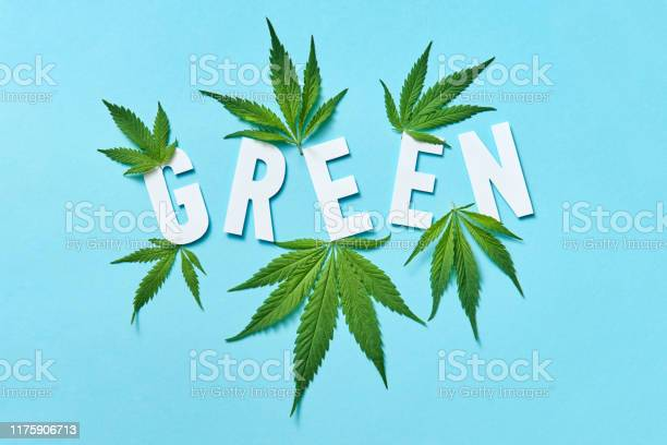White paper word green with marijuana leaves on a pastel blue picture id1175906713?b=1&k=6&m=1175906713&s=612x612&h=k9eev05nlm0mpqb9l lhu8sdcmk60n8evdq aufeeys=