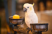 A white parrot in zoo.