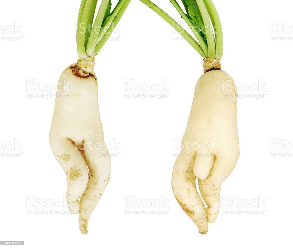 white parsnip vegetables royalty-free stock photo