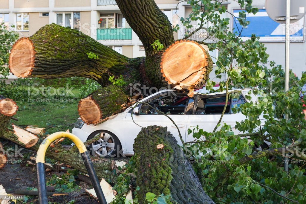 White passenger car crushed by fallen tree stock photo