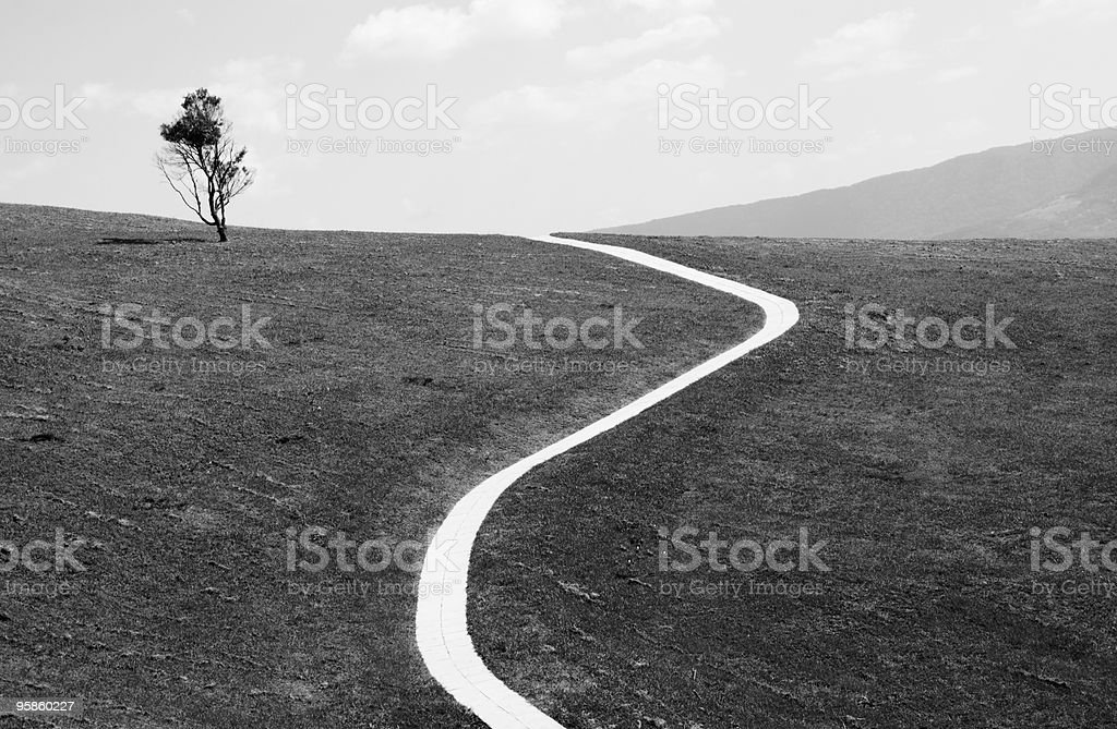 White path in field and one tree, copy space royalty-free stock photo