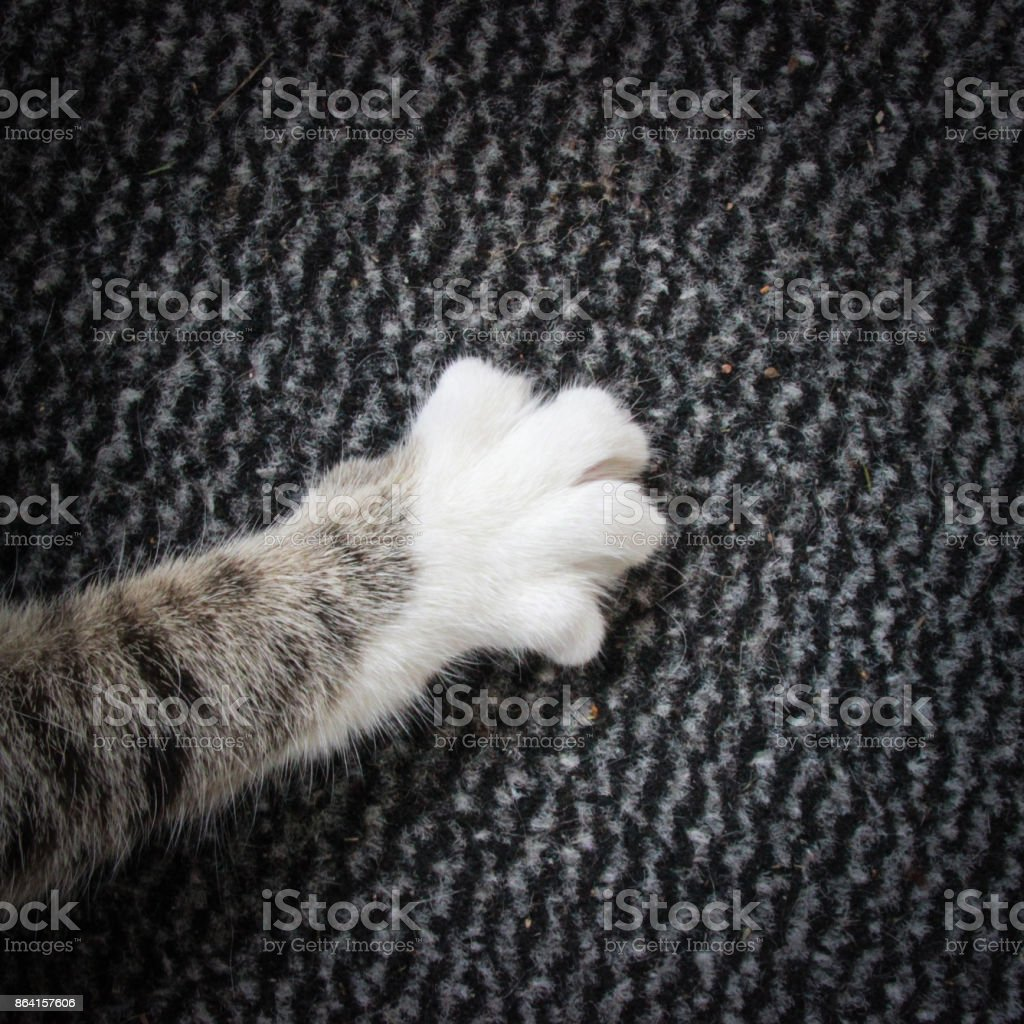 white paw of a cat royalty-free stock photo