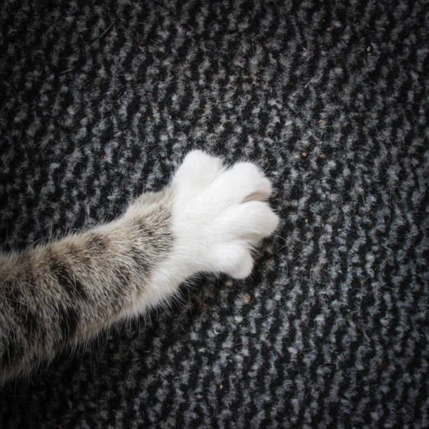White paw of a cat picture id864157606?b=1&k=6&m=864157606&s=612x612&w=0&h=er4etldab7wfxxnbonafpuhzmzmyqqmhtksntn3zsrk=