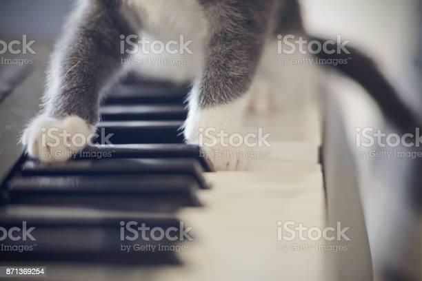 White paws of a cat on synthesizer keys picture id871369254?b=1&k=6&m=871369254&s=612x612&h=ljq5fekoq 1rea5mlutmayqdjpduvonqrdp71tguips=