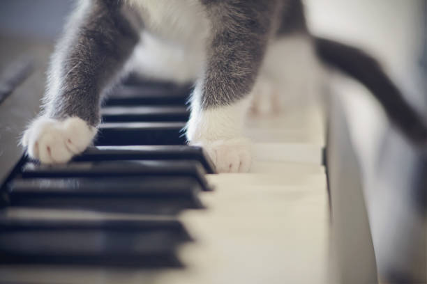 White paws of a cat on synthesizer keys picture id871369254?b=1&k=6&m=871369254&s=612x612&w=0&h=fp6ue7t fn  fltrn3qse9djhwbi1ukxkohta4msobk=