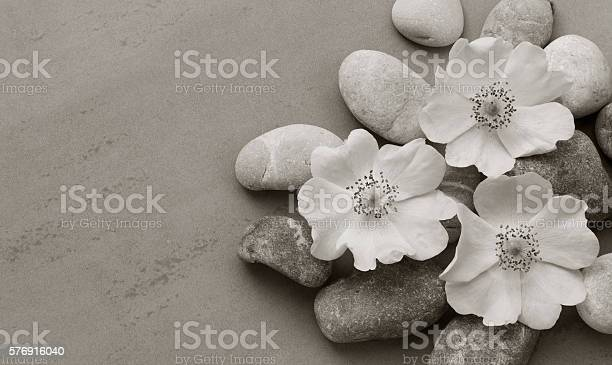 White pebbles on the flower wild rose on gray background picture id576916040?b=1&k=6&m=576916040&s=612x612&h=rgdce6bwncf xhnega08en2xir3gevvtbasx51ngahe=