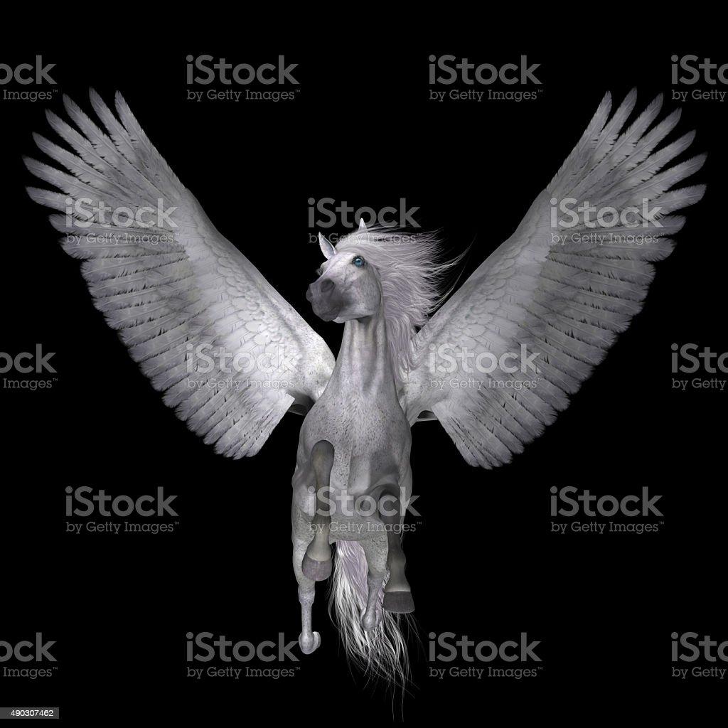 White Pegasus on Black stock photo