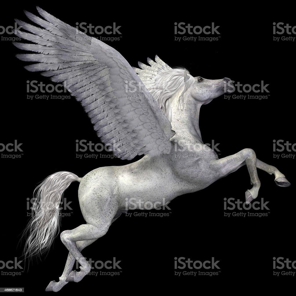 White Pegasus Profile stock photo