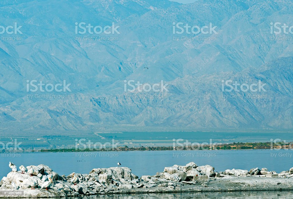 White pelicans on shore of Salton Sea in southern California stock photo