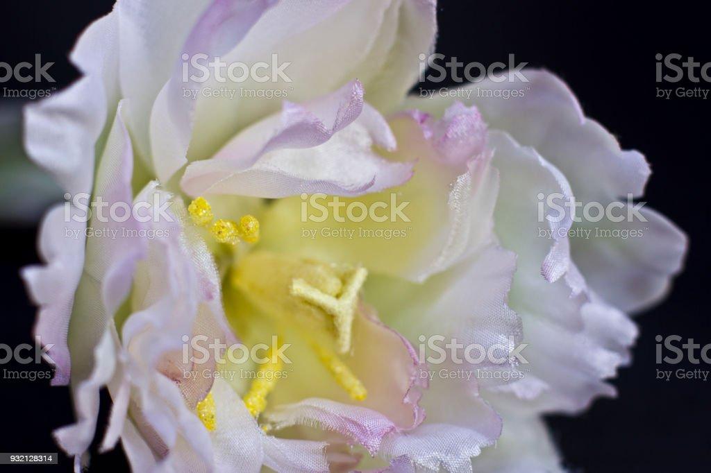 White peony closeup at the black backgroud artificial silk flowers white peony close up at the black backgroud artificial silk flowers royalty free mightylinksfo