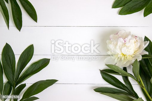 istock White peony flower and leaves on white rustic wooden background with blank space for text. Mockup, top view 803987836
