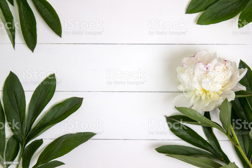 White peony flower and leaves on white rustic wooden background with blank space for text. Mockup, top view stock photo
