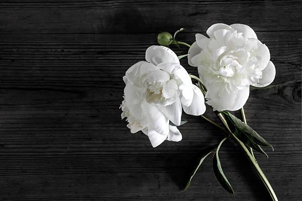 white peony flowers in darkness – Foto