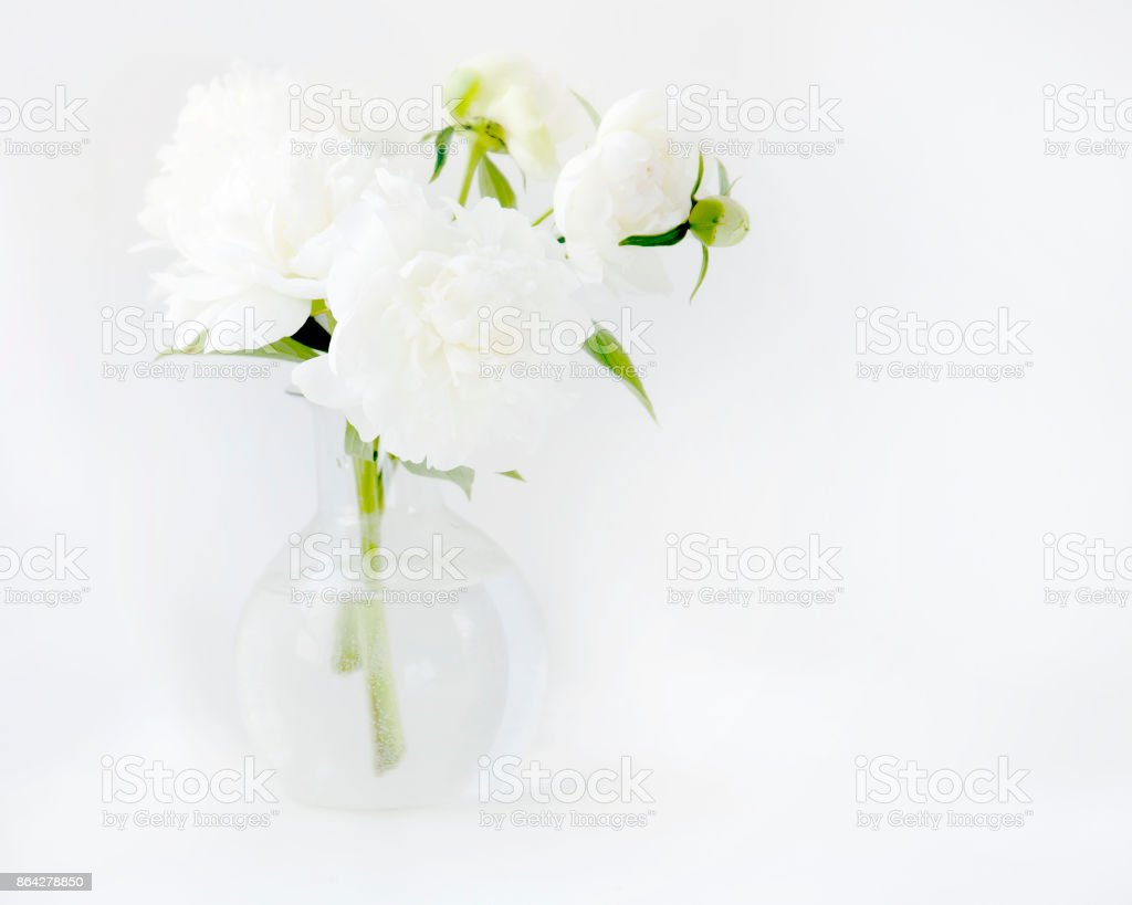 White peony in glass vase on white background royalty-free stock photo