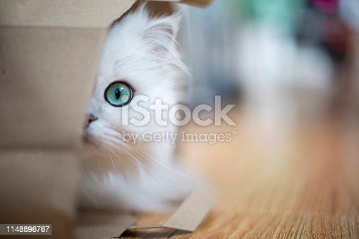 White Persian cat hidden in a paper bag