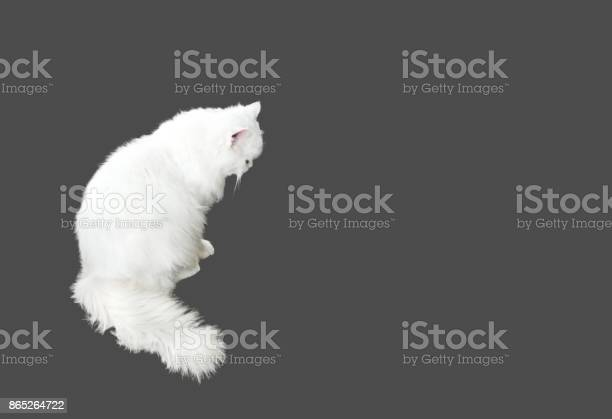 White persian cat sitting on gray background clipping path picture id865264722?b=1&k=6&m=865264722&s=612x612&h=xiedaa8rnagwvbry437t98he734huxmtg0ihjgnmkvk=