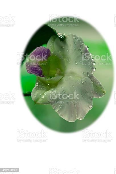 White phalaenopsis orchid picture id492123302?b=1&k=6&m=492123302&s=612x612&h=zrd3jsvclynbbterahfbw0icozfwcucve73 w3xfxbi=