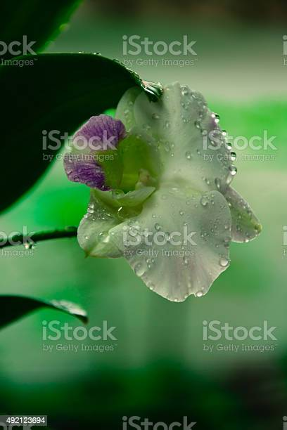 White phalaenopsis orchid picture id492123694?b=1&k=6&m=492123694&s=612x612&h=dssmdphpsubdxr26rkpupv 5e1rajt3ku1lto 17hae=