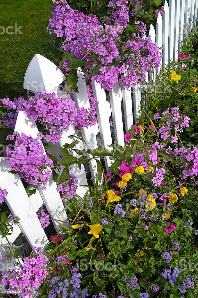 White picket fence with phlox and wildflowers stock photo more white picket fence with phlox and wildflowers royalty free stock photo mightylinksfo