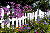 White Picket Fence with Phlox and Wildflowers