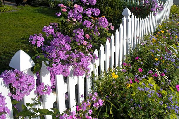 weiße gartenzaun mit phlox und wildblumen - lattenzaun garten stock-fotos und bilder