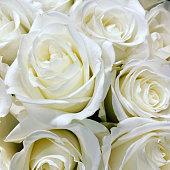 istock White 1256610334