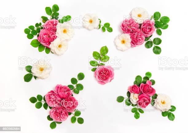 White pink rose flowers green leaves floral flat lay picture id692560584?b=1&k=6&m=692560584&s=612x612&h=5gfgmkivahrpuwwpov39fubjogr7nskcx2ejjqpa4zq=