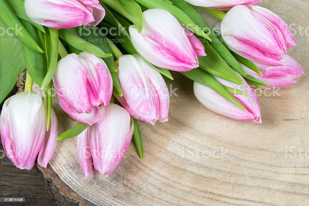 White Pink Tulips stock photo