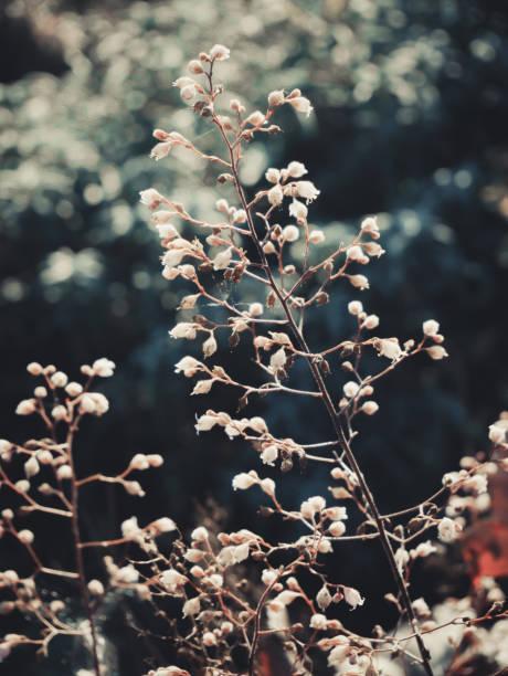 White plant in the garden – zdjęcie