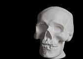 white plaster human skull on a black background