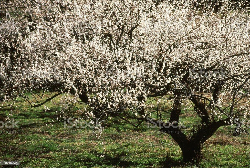 ホワイトの花 ロイヤリティフリーストックフォト